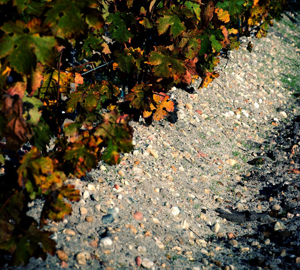 Gravel in the vineyard