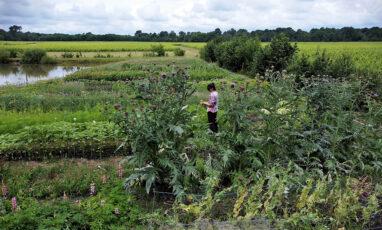 paulineflowerfarm